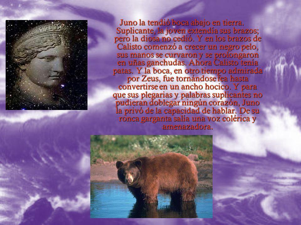 Al saber Juno que Calisto había dado a luz a un niño sano y fuerte al que había llamado Arcas, sintió que su vengativa paciencia había llegado al lími
