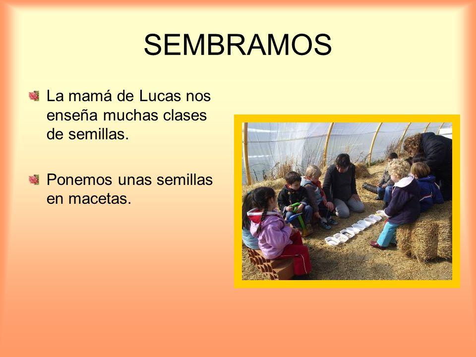 SEMBRAMOS La mamá de Lucas nos enseña muchas clases de semillas. Ponemos unas semillas en macetas.