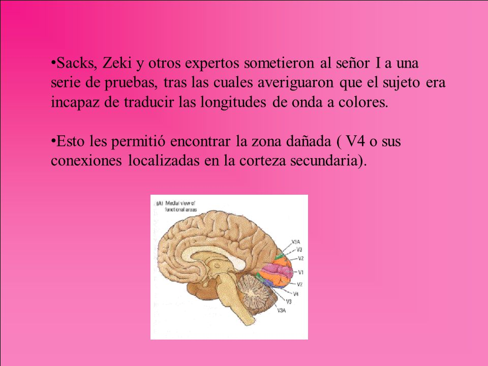 Sacks, Zeki y otros expertos sometieron al señor I a una serie de pruebas, tras las cuales averiguaron que el sujeto era incapaz de traducir las longi
