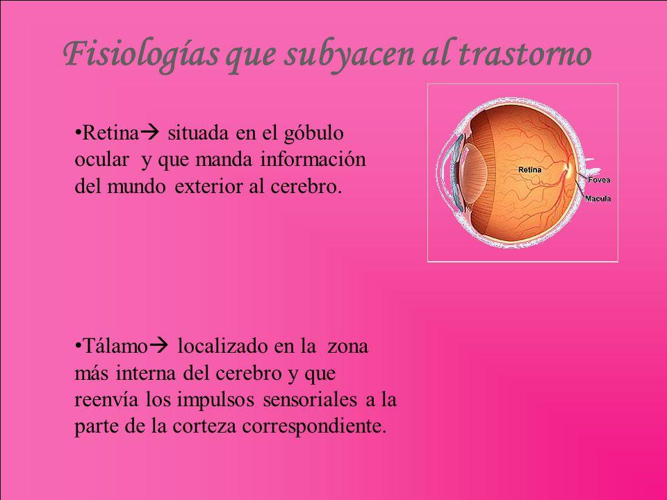 Fisiologías que subyacen al trastorno Retina situada en el góbulo ocular y que manda información del mundo exterior al cerebro. Tálamo localizado en l
