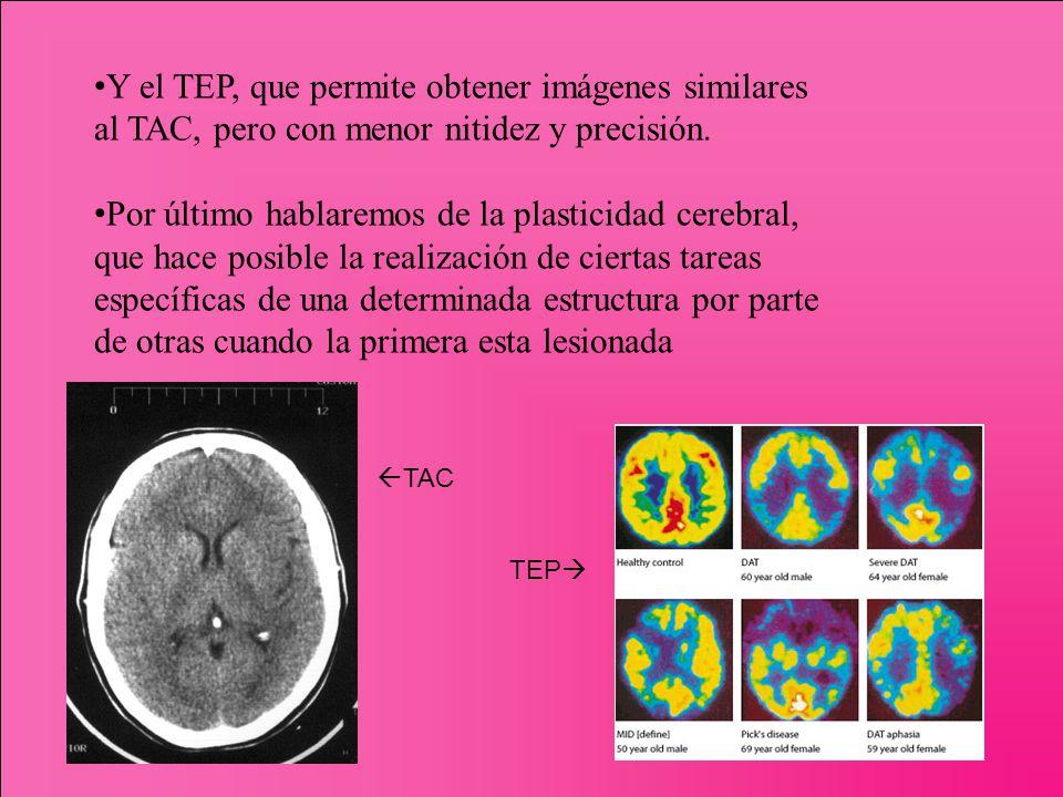 Y el TEP, que permite obtener imágenes similares al TAC, pero con menor nitidez y precisión. Por último hablaremos de la plasticidad cerebral, que hac