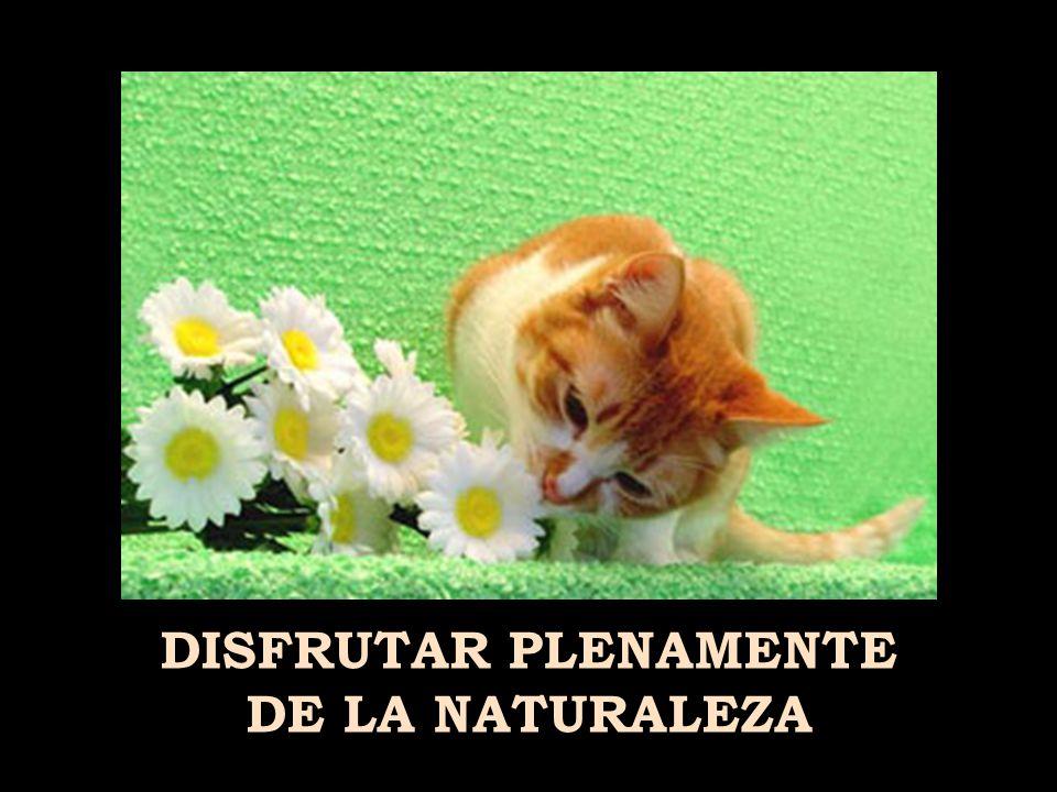 ENAMORARTE ( MÁS,...DE TU PAREJA, ¡NO DE OTRO/A, PILLÍN/A! )