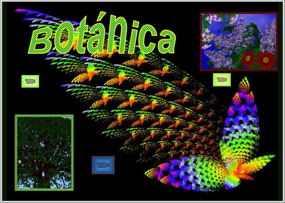 ¿La vibración de las alas de una mariposa en Brasil pue-de desencadenar un ciclón en Tejas? .