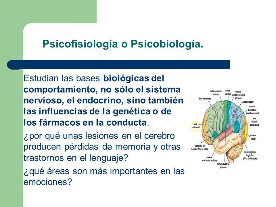 Psicofisiología o Psicobiología. Estudian las bases biológicas del comportamiento, no sólo el sistema nervioso, el endocrino, sino también las influen