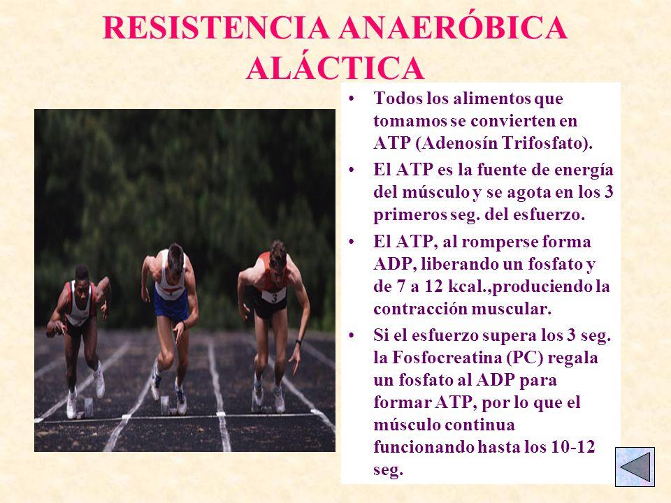 RESISTENCIA ANAERÓBICA ALÁCTICA Todos los alimentos que tomamos se convierten en ATP (Adenosín Trifosfato).