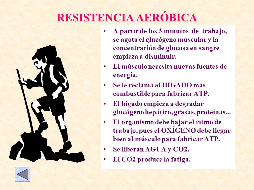 RESISTENCIA AERÓBICA A partir de los 3 minutos de trabajo, se agota el glucógeno muscular y la concentración de glucosa en sangre empieza a disminuir.