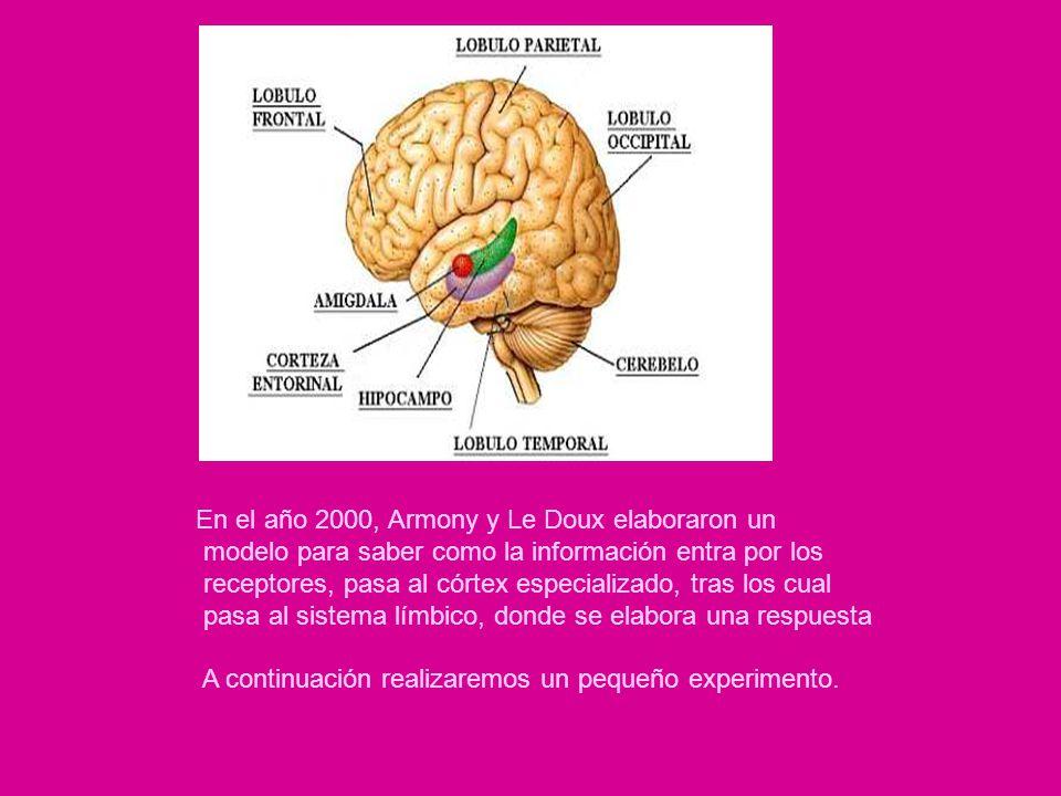 En el año 2000, Armony y Le Doux elaboraron un modelo para saber como la información entra por los receptores, pasa al córtex especializado, tras los