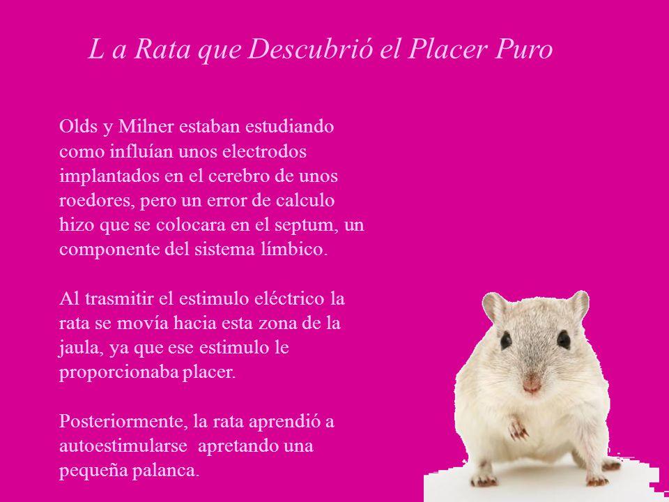 L a Rata que Descubrió el Placer Puro Olds y Milner estaban estudiando como influían unos electrodos implantados en el cerebro de unos roedores, pero