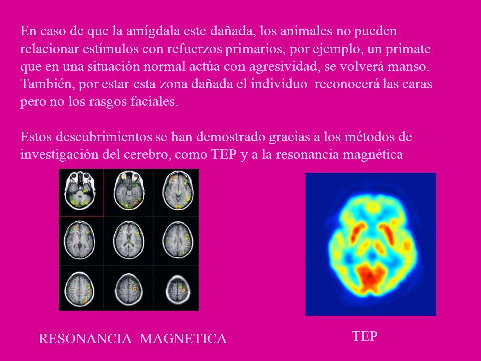 En caso de que la amígdala este dañada, los animales no pueden relacionar estímulos con refuerzos primarios, por ejemplo, un primate que en una situac