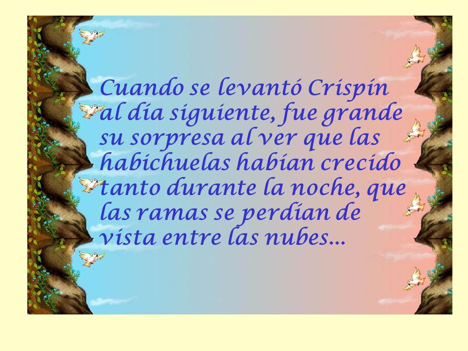 Cuando se levantó Crispín al día siguiente, fue grande su sorpresa al ver que las habichuelas habían crecido tanto durante la noche, que las ramas se perdían de vista entre las nubes...