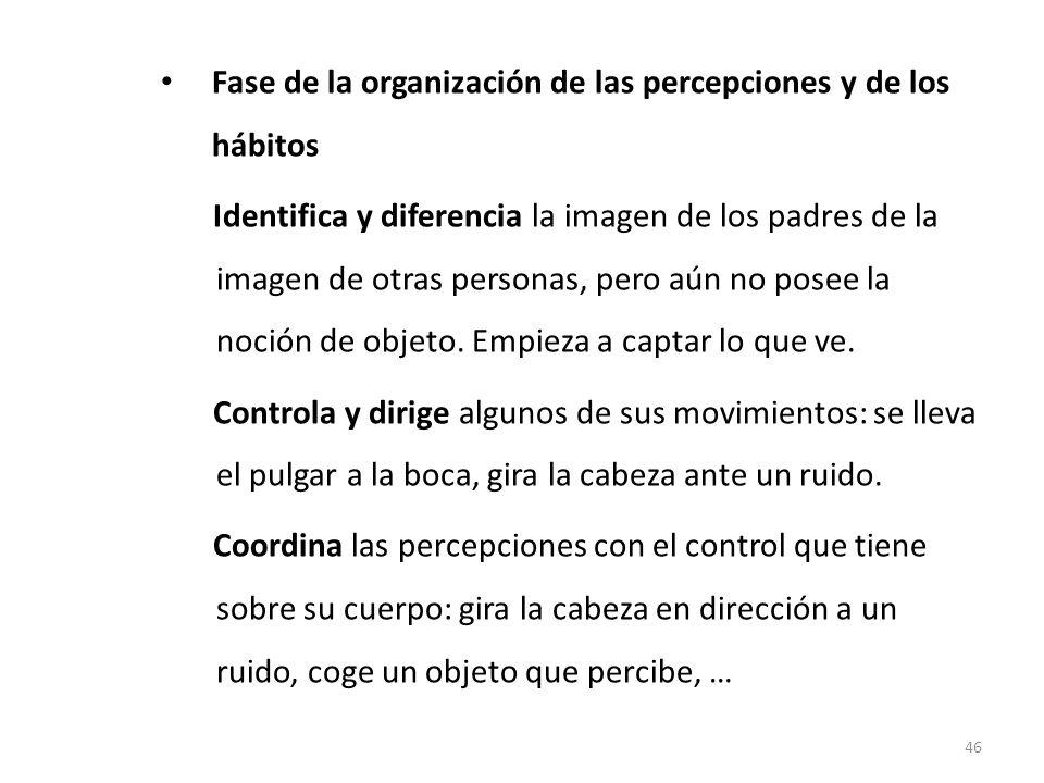 Fase de la organización de las percepciones y de los hábitos (3 – 6 meses) Identifica y diferencia la imagen de los padres de la imagen de otras perso
