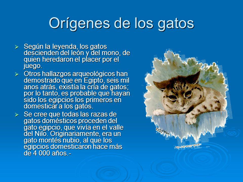 Orígenes de los gatos Según la leyenda, los gatos descienden del león y del mono, de quien heredaron el placer por el juego. Según la leyenda, los gat