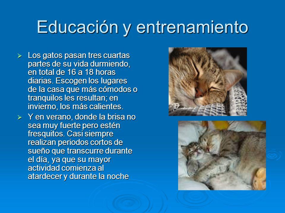 Educación y entrenamiento Los gatos pasan tres cuartas partes de su vida durmiendo, en total de 16 a 18 horas diarias. Escogen los lugares de la casa