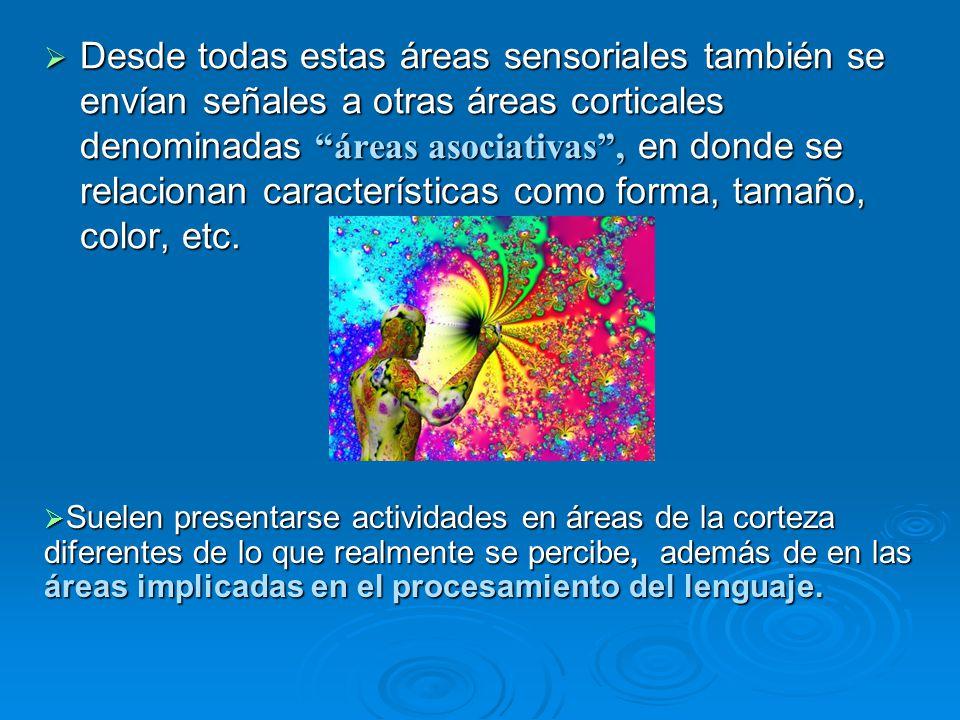 Desde todas estas áreas sensoriales también se envían señales a otras áreas corticales denominadas áreas asociativas, en donde se relacionan caracterí