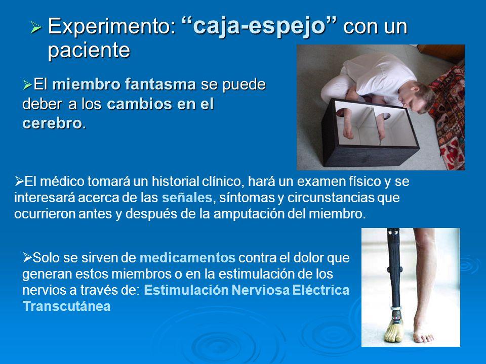 Experimento: caja-espejo con un paciente Experimento: caja-espejo con un paciente El miembro fantasma se puede deber a los cambios en el cerebro. El m