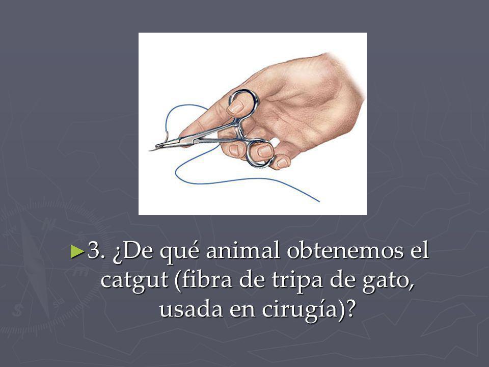 3. ¿De qué animal obtenemos el catgut (fibra de tripa de gato, usada en cirugía)? 3. ¿De qué animal obtenemos el catgut (fibra de tripa de gato, usada