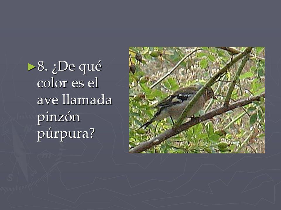8. ¿De qué color es el ave llamada pinzón púrpura? 8. ¿De qué color es el ave llamada pinzón púrpura?