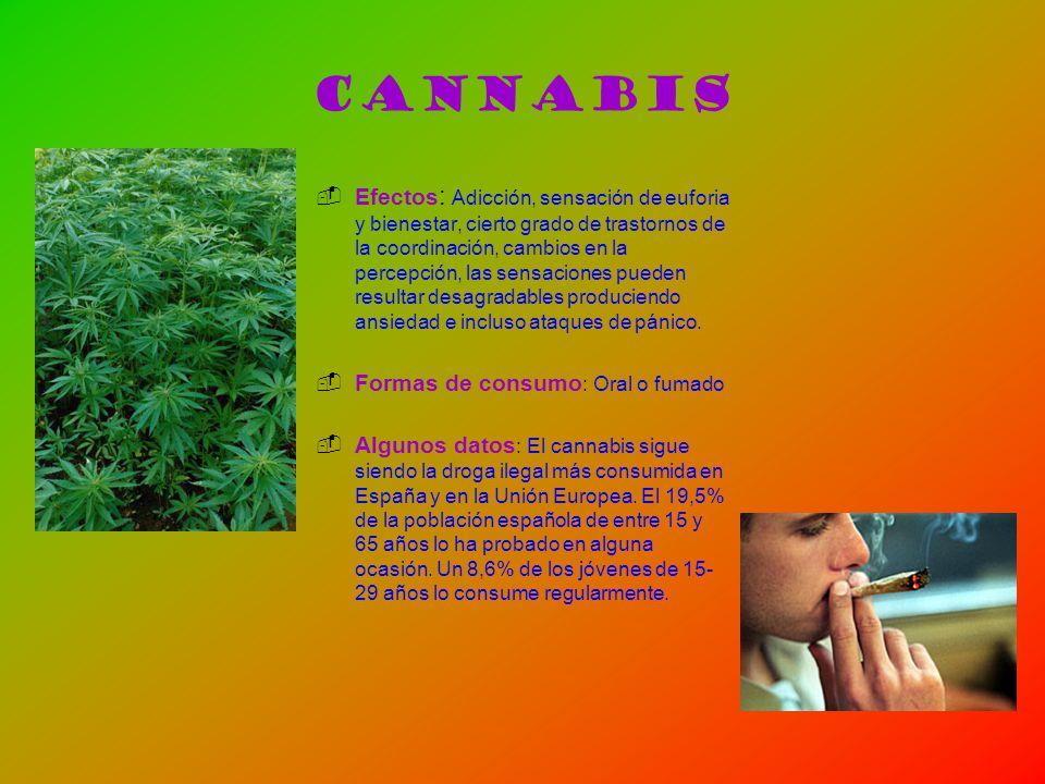 Cannabis Efectos : Adicción, sensación de euforia y bienestar, cierto grado de trastornos de la coordinación, cambios en la percepción, las sensacione