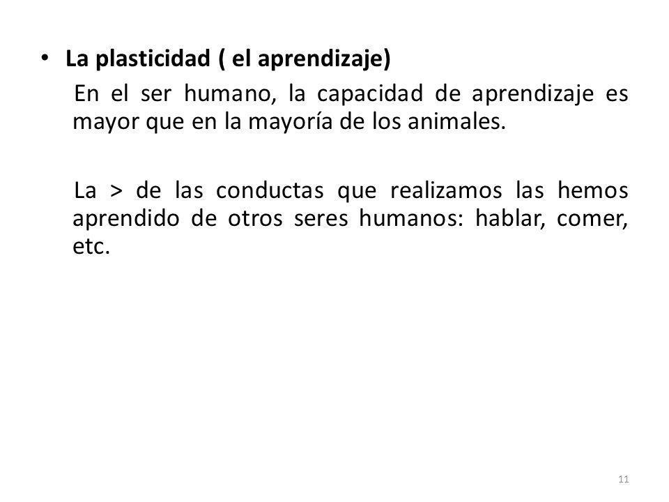 La plasticidad ( el aprendizaje) En el ser humano, la capacidad de aprendizaje es mayor que en la mayoría de los animales. La > de las conductas que r