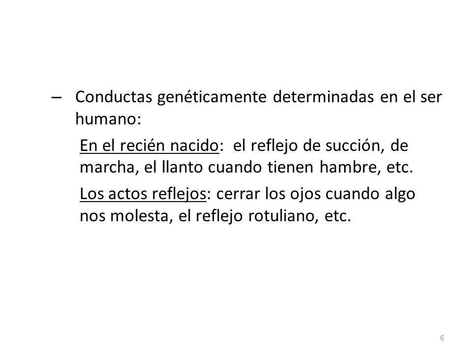– Conductas genéticamente determinadas en el ser humano: En el recién nacido: el reflejo de succión, de marcha, el llanto cuando tienen hambre, etc. L