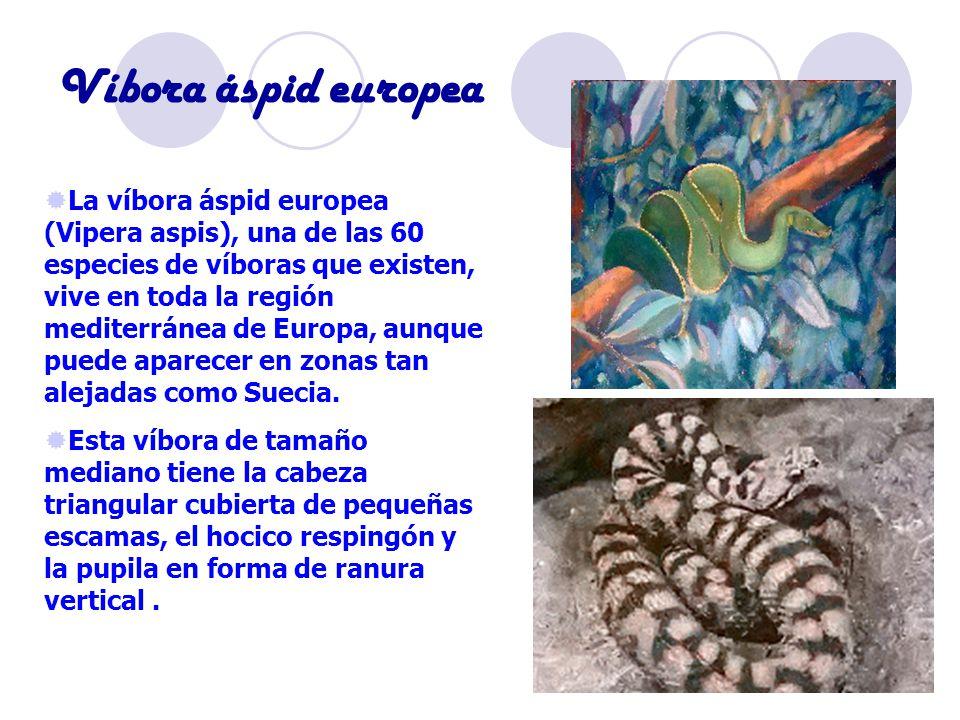 Víbora áspid europea La víbora áspid europea (Vipera aspis), una de las 60 especies de víboras que existen, vive en toda la región mediterránea de Europa, aunque puede aparecer en zonas tan alejadas como Suecia.