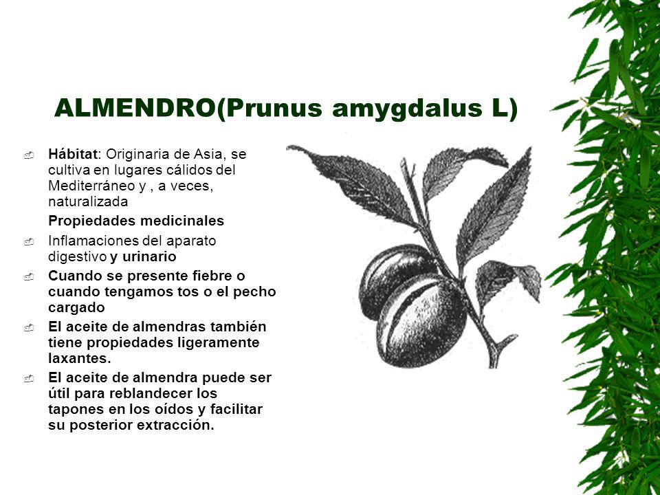 ALMENDRO(Prunus amygdalus L) Hábitat: Originaria de Asia, se cultiva en lugares cálidos del Mediterráneo y, a veces, naturalizada Propiedades medicina
