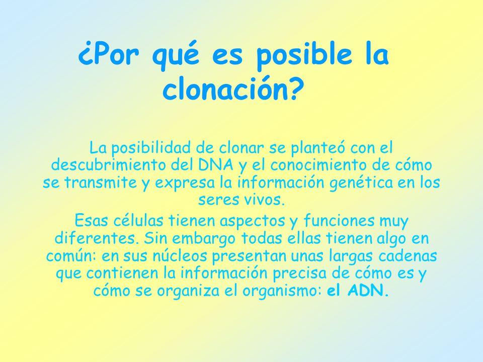 ¿Por qué es posible la clonación? La posibilidad de clonar se planteó con el descubrimiento del DNA y el conocimiento de cómo se transmite y expresa l