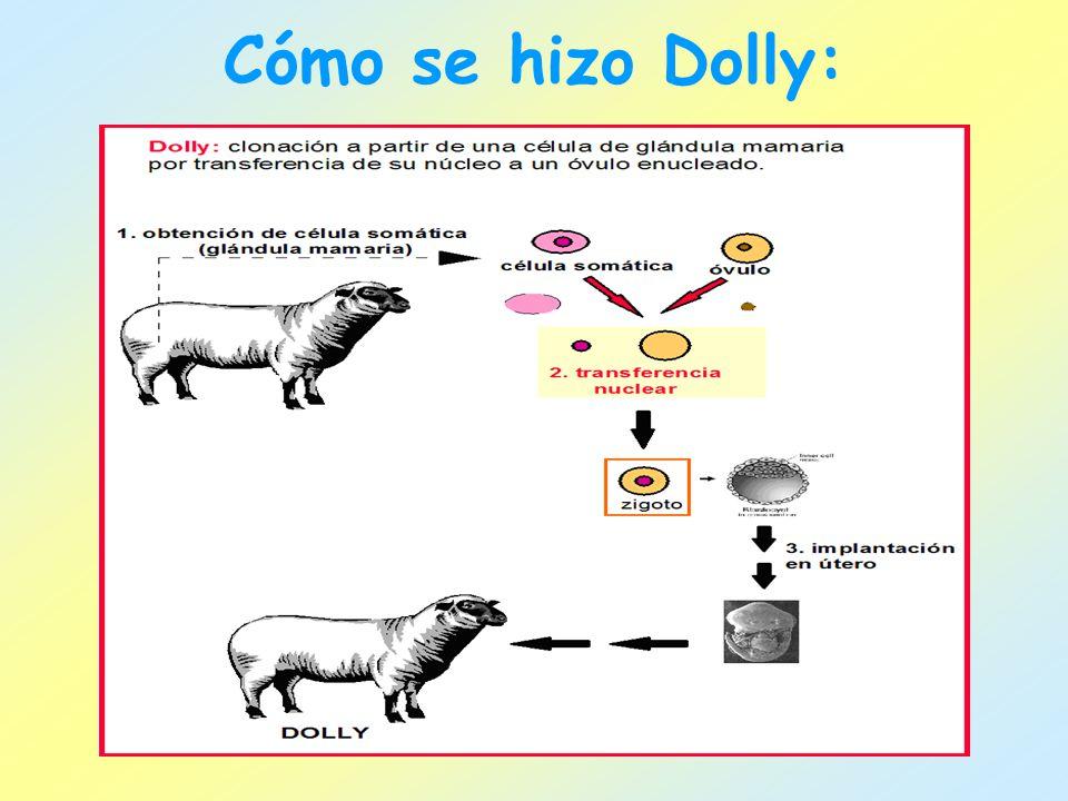 Cómo se hizo Dolly:
