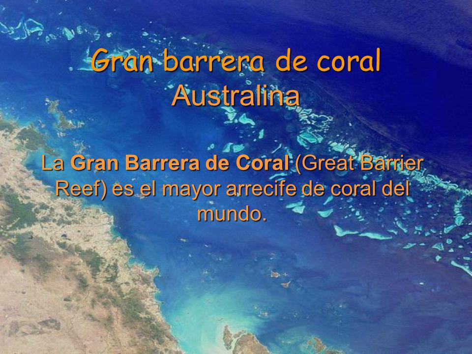 Gran barrera de coral Australina La Gran Barrera de Coral (Great Barrier Reef) es el mayor arrecife de coral del mundo.