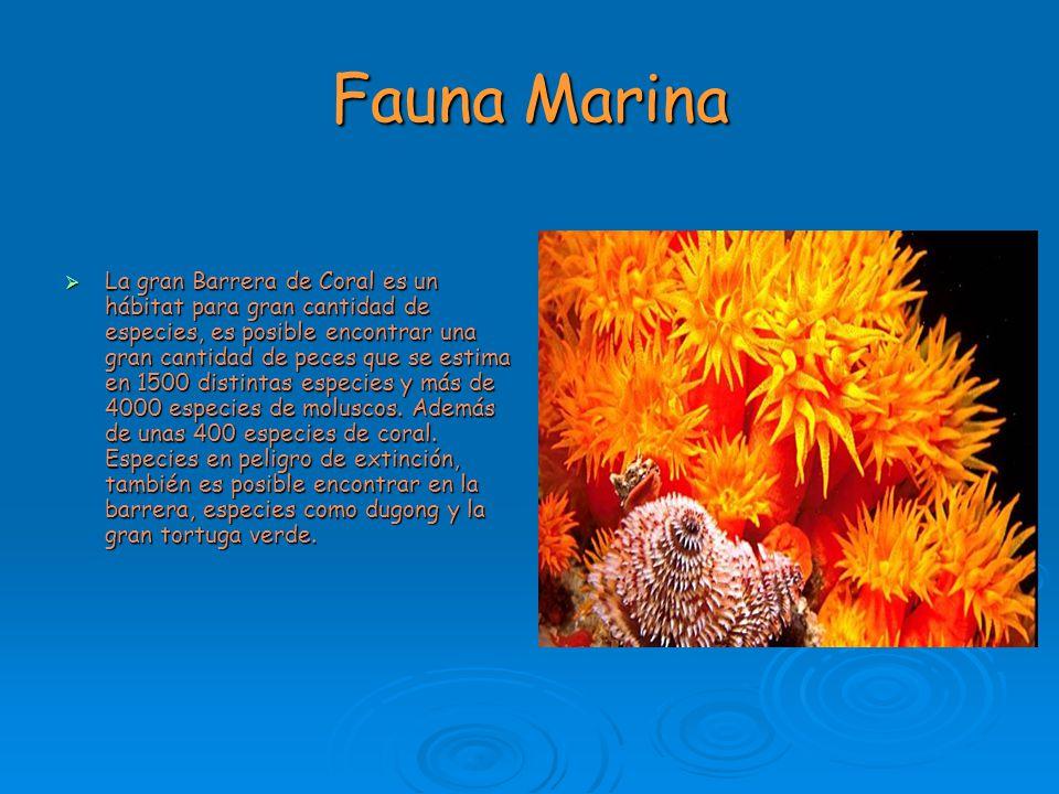 Fauna Marina La gran Barrera de Coral es un hábitat para gran cantidad de especies, es posible encontrar una gran cantidad de peces que se estima en 1
