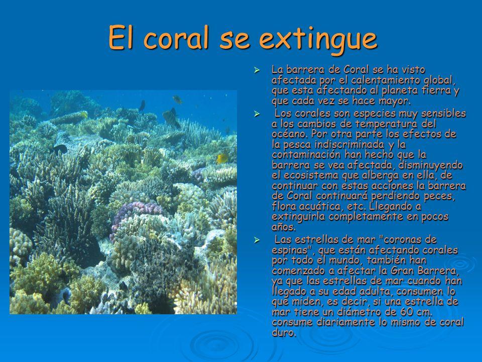 El coral se extingue La barrera de Coral se ha visto afectada por el calentamiento global, que esta afectando al planeta tierra y que cada vez se hace