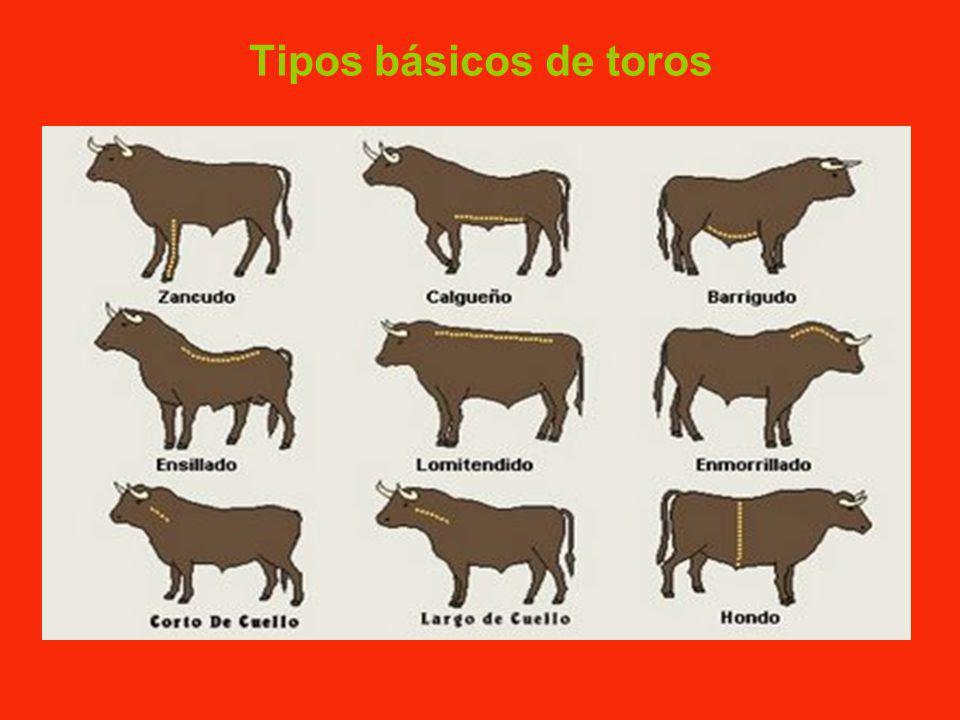 LA HISTORIA DE LOS TOROS DE LIDIA