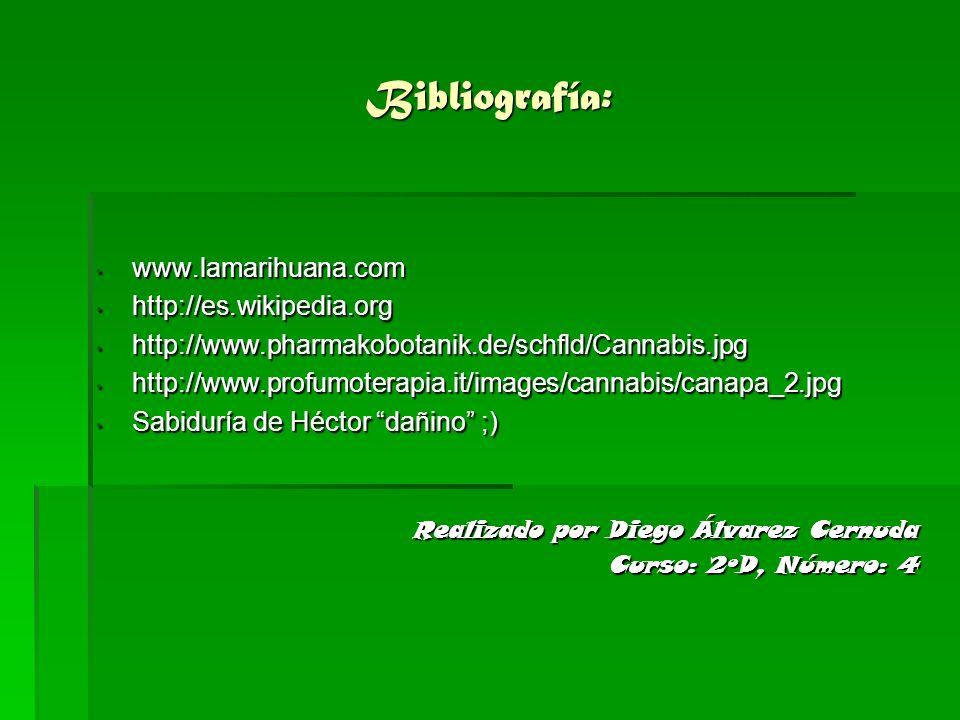 Bibliografía: www.lamarihuana.com www.lamarihuana.com http://es.wikipedia.org http://es.wikipedia.org http://www.pharmakobotanik.de/schfld/Cannabis.jp