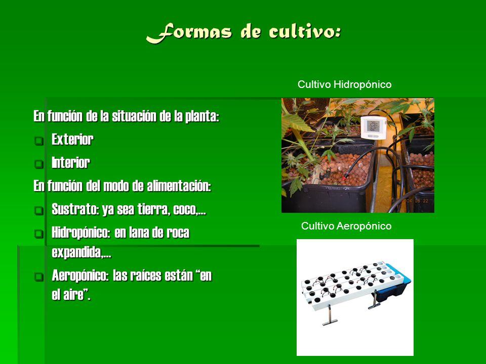 Formas de cultivo: En función de la situación de la planta: Exterior Exterior Interior Interior En función del modo de alimentación: Sustrato: ya sea
