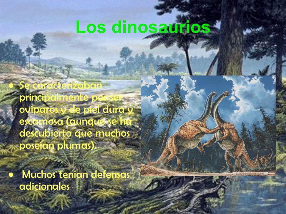 Los dinosaurios Se caracterizaban principalmente por ser ovíparos y de piel dura y escamosa (aunque se ha descubierto que muchos poseían plumas). Much