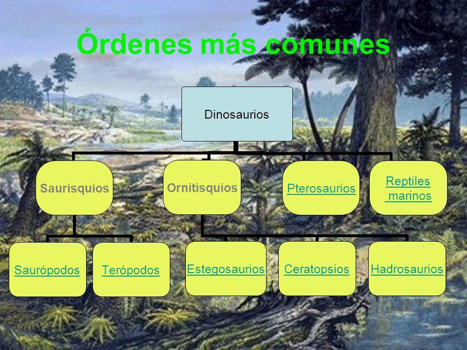 Órdenes más comunes Dinosaurios Saurisquios SaurópodosTerópodos Ornitisquios EstegosauriosCeratopsiosHadrosaurios Pterosaurios Reptiles marinos