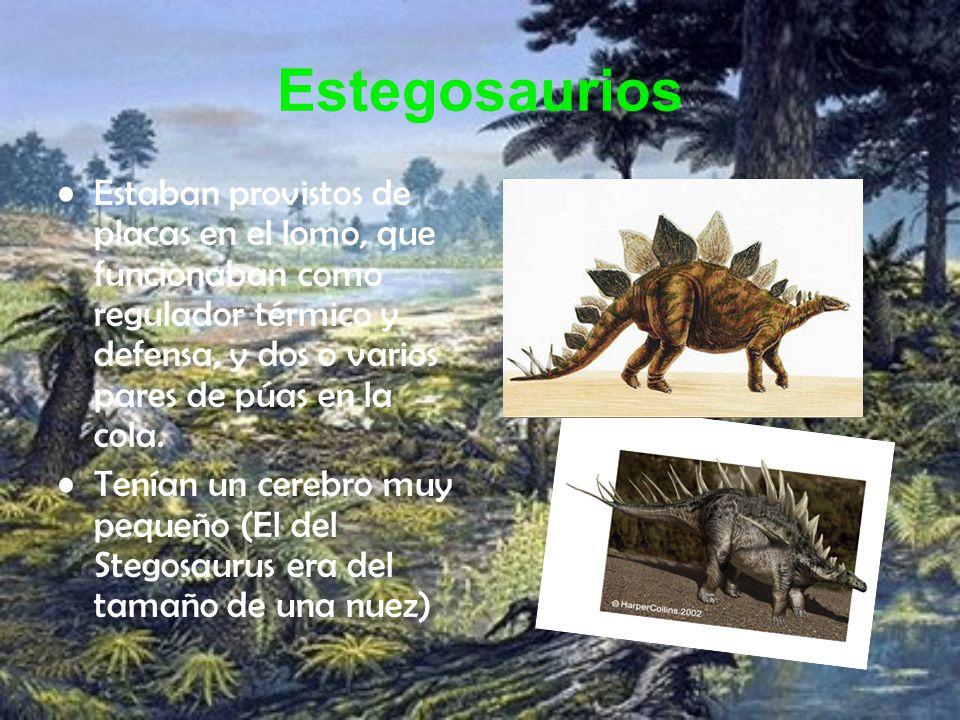 Estegosaurios Estaban provistos de placas en el lomo, que funcionaban como regulador térmico y defensa, y dos o varios pares de púas en la cola. Tenía
