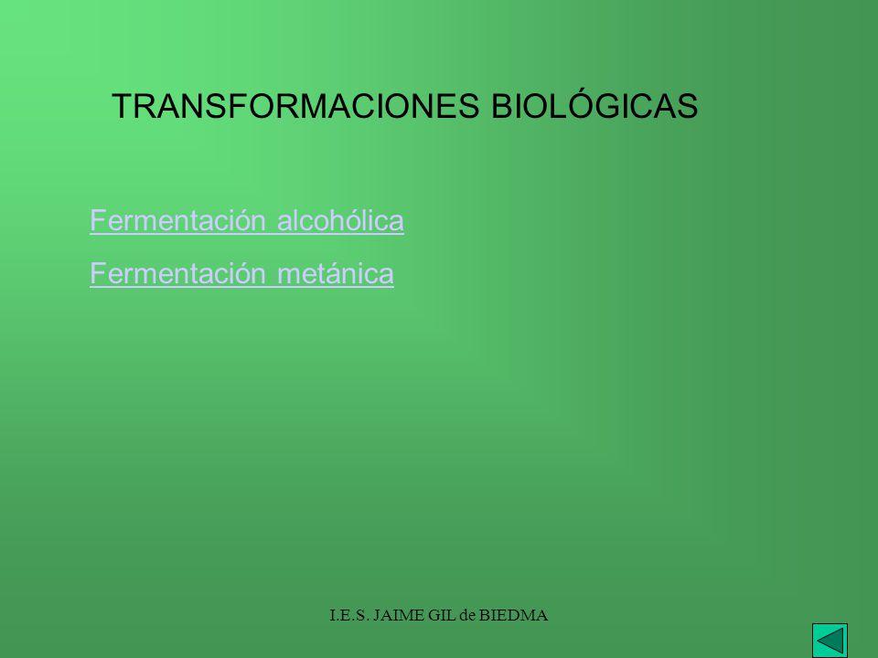 I.E.S. JAIME GIL de BIEDMA TRANSFORMACIONES BIOLÓGICAS Fermentación alcohólica Fermentación metánica