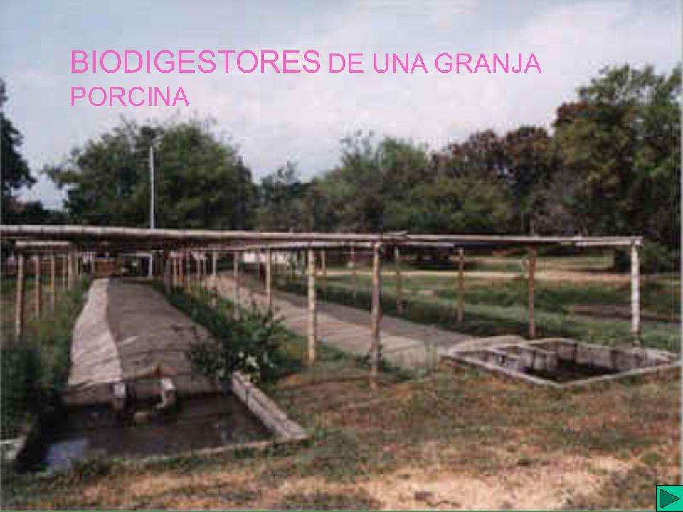 I.E.S. JAIME GIL de BIEDMA BIODIGESTORES DE UNA GRANJA PORCINA
