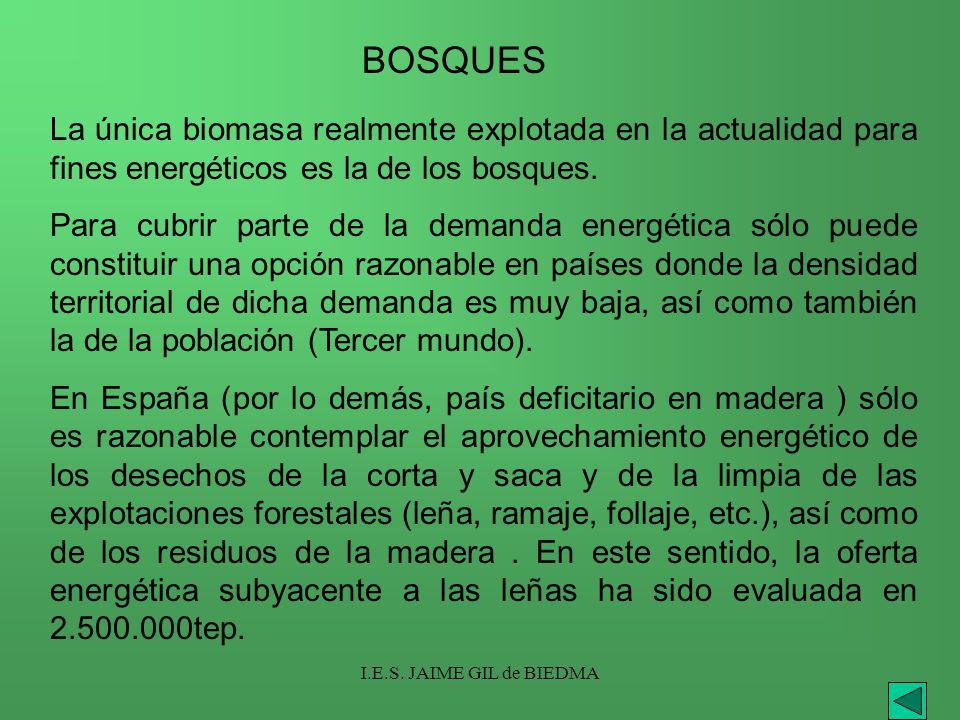 I.E.S. JAIME GIL de BIEDMA La única biomasa realmente explotada en la actualidad para fines energéticos es la de los bosques. Para cubrir parte de la