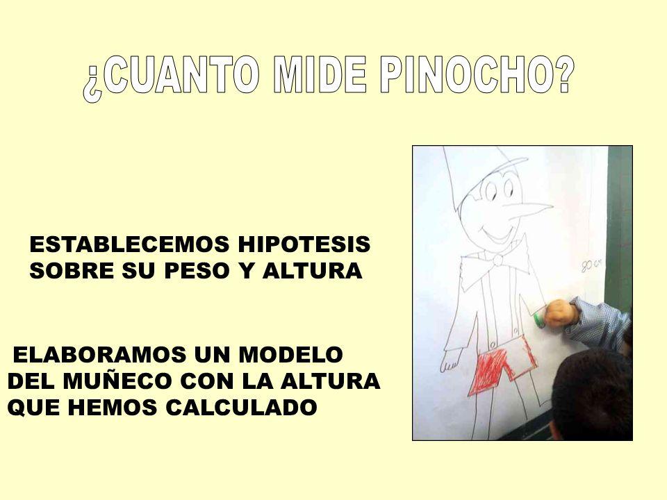 ESTABLECEMOS HIPOTESIS SOBRE SU PESO Y ALTURA ELABORAMOS UN MODELO DEL MUÑECO CON LA ALTURA QUE HEMOS CALCULADO