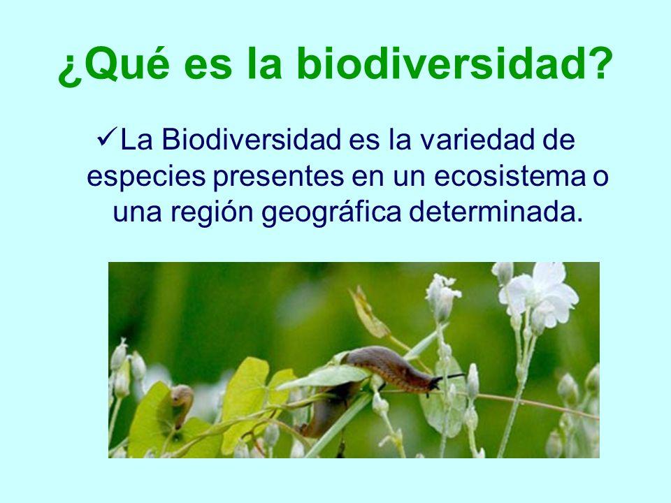 ¿Qué es la biodiversidad? La Biodiversidad es la variedad de especies presentes en un ecosistema o una región geográfica determinada.