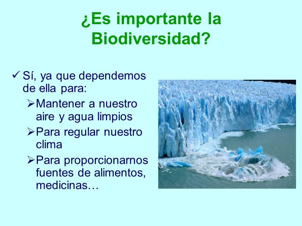 ¿Es importante la Biodiversidad? Sí, ya que dependemos de ella para: Mantener a nuestro aire y agua limpios Para regular nuestro clima Para proporcion