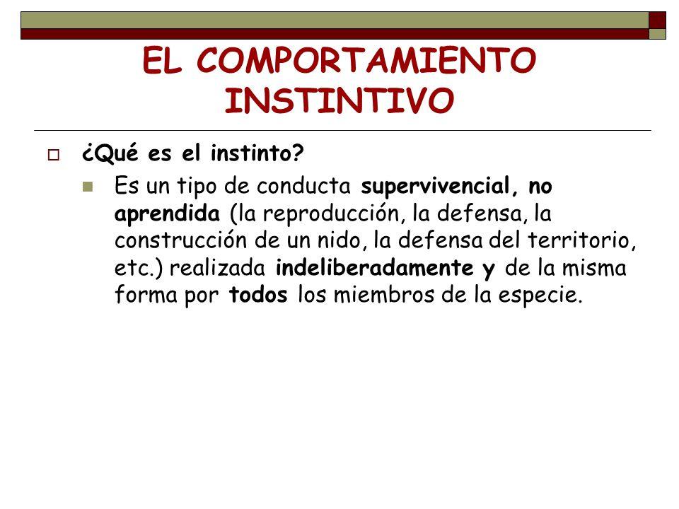 EL COMPORTAMIENTO INSTINTIVO ¿Qué es el instinto? Es un tipo de conducta supervivencial, no aprendida (la reproducción, la defensa, la construcción de