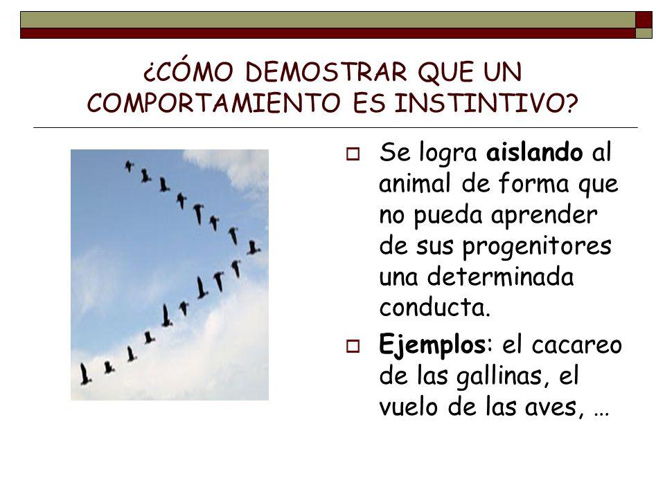 LA COMUNICACIÓN ANIMAL.