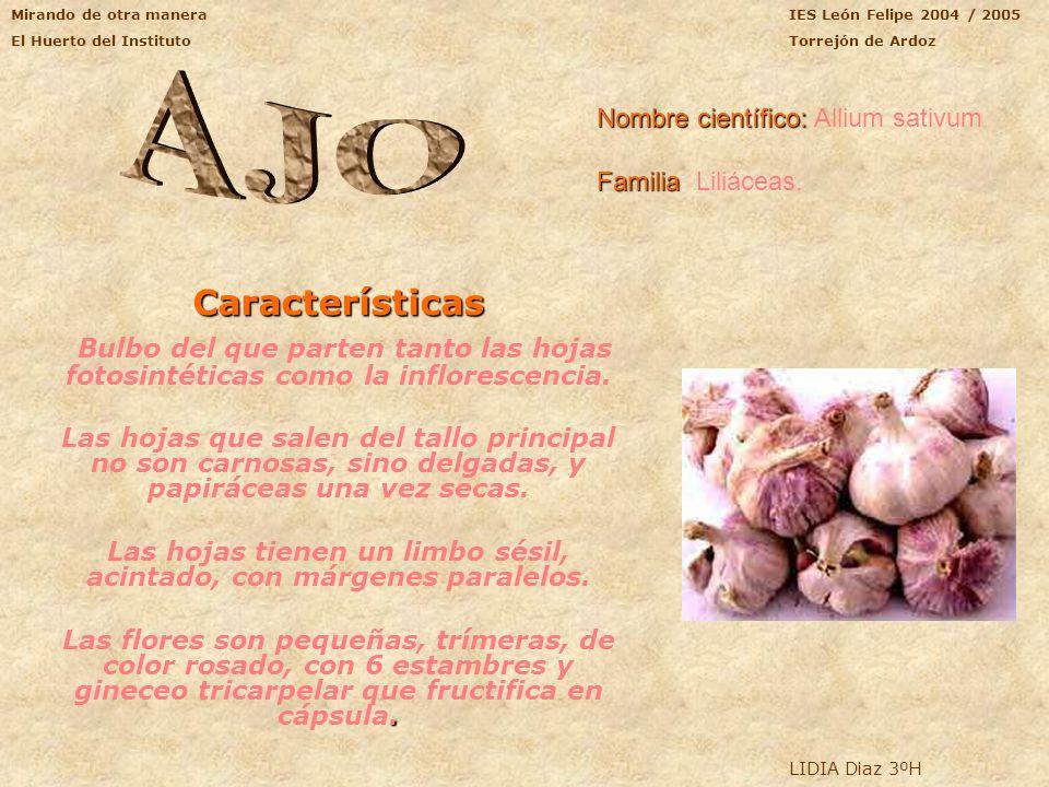 Mirando de otra manera El Huerto del Instituto IES León Felipe 2004/2005 Torrejón de Ardoz MORFOLOGÍA Y TAXONOMÍA: Familia: Quenopodiaceae Nombre cien