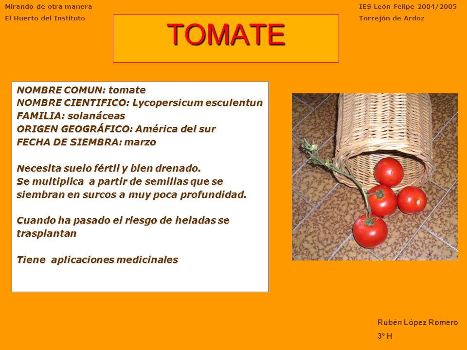 Mirando de otra manera El Huerto del Instituto IES León Felipe 2004/2005 Torrejón de Ardoz Juan Ramón Parrilla Campillo 3ºH Su exótico sabor, además d