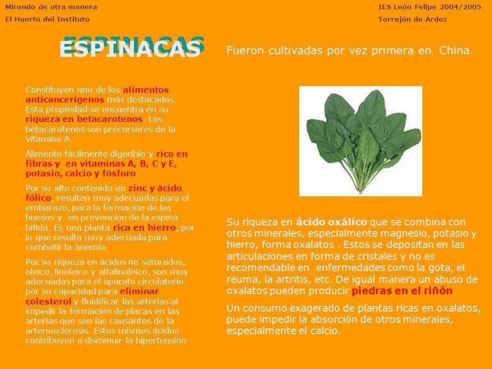 Mirando de otra manera El Huerto del Instituto IES León Felipe 2004/2005 Torrejón de Ardoz ESPINACAS Fueron cultivadas por vez primera en China.