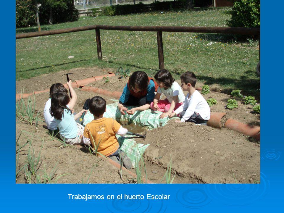 Trabajamos en el huerto Escolar