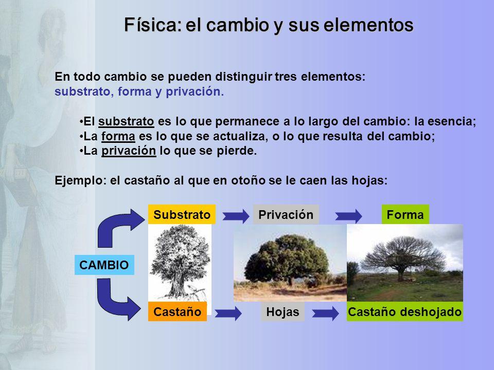CAMBIO SubstratoPrivaciónForma CastañoHojasCastaño deshojado En todo cambio se pueden distinguir tres elementos: substrato, forma y privación. El subs